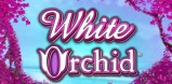 Cover art for White Orchid slot
