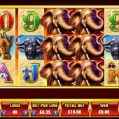 Safari Spirit Slot
