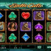 exotic cats slot game