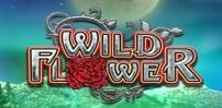 Cover art for Wild Flower slot